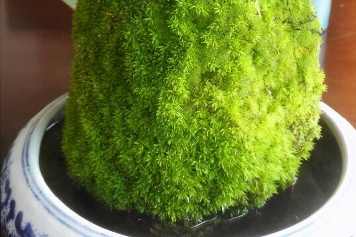 上水石种什么植物最好(上水石怎么养出苔藓)插图(5)